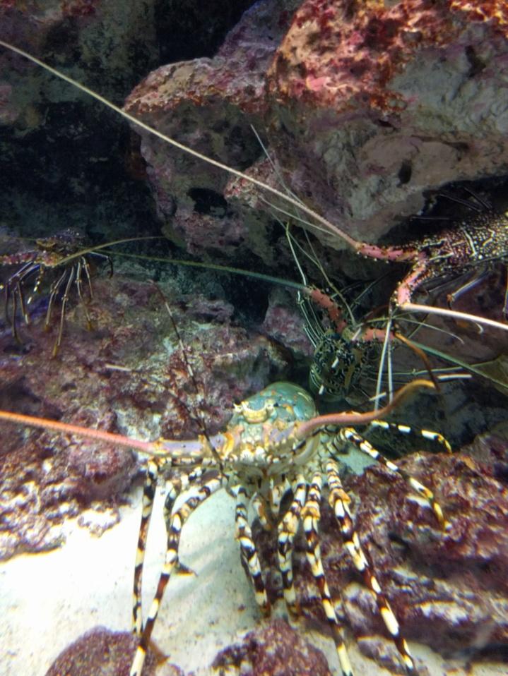 GIANT crabs!