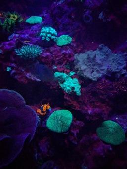 Bio luminescent corals
